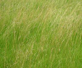 Low maintenance green roof grass mats