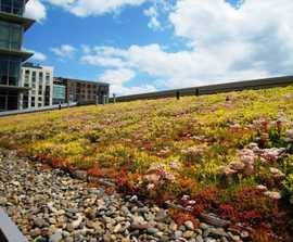 Sedum Mat - instant vegetation green roof mats