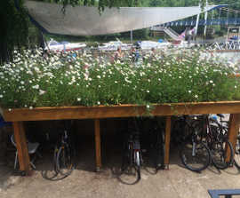 Wildflower green roof for cycle shed