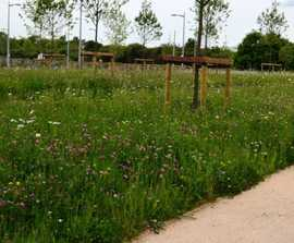 Meadowmat for SuDS and Slopes